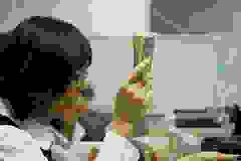 Tỷ giá hạ nhiệt sau khi vọt lên 23.700 VND/USD