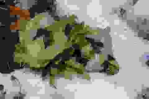 Na bở bỗng thành hàng hiếm, hoa lạ Trung Quốc 33 triệu đồng/bông tranh nhau mua