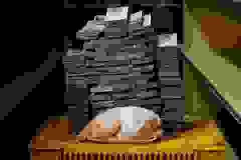 Siêu lạm phát khiến 1 con gà tại Venezuela giá 14 triệu bolivar