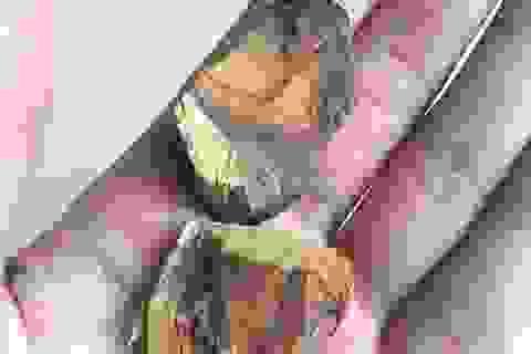 15 năm buôn gỗ sưa vẫn bị lừa mất trắng cả tỷ bạc