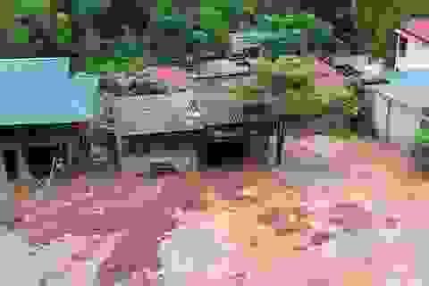 Mưa lớn, nhiều hộ dân Thanh Hóa phải di dời khẩn cấp