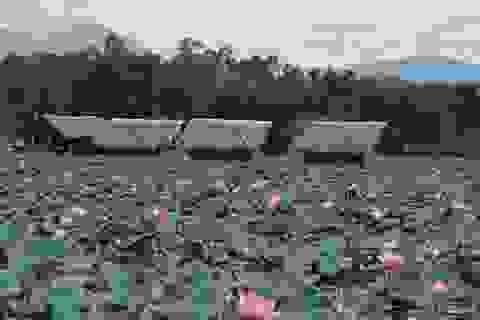 Quảng Ngãi: Kiếm hàng chục triệu đồng từ bán hạt sen cuối mùa