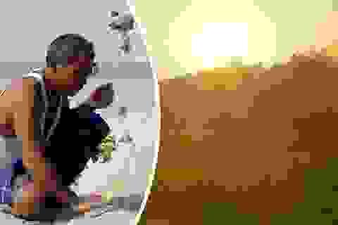 Ấn Độ: Người đàn ông một mình trồng cả cánh rừng trong 40 năm