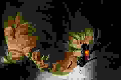 Nọc ong vò vẽ: Độc chết người, chứa chất tiêu diệt tế bào ung thư!