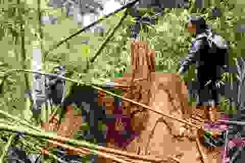 Cách các chức vụ trong Đảng của nguyên Giám đốc rừng phòng hộ Nam Sông Bung