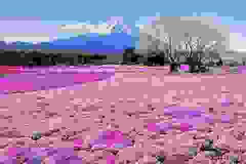 """Học tiếng Nhật: Miêu tả thời tiết mùa Xuân xứ sở """"mặt trời mọc"""""""