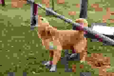 Tử vong sau gần 2 tháng bị chó dại cắn vào tay