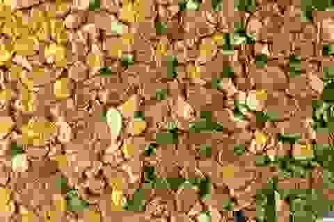 Bạn có biết: Bao nhiêu % lượng vàng trên thế giới chưa được tìm thấy?