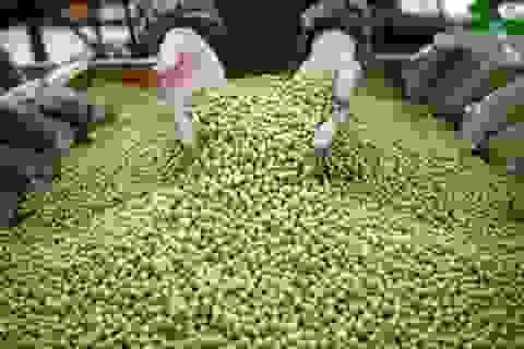 Hạt đậu nành khiến Tổng thống Mỹ nổi giận