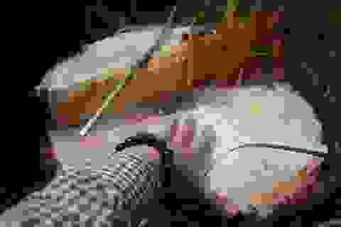 Tận diệt rừng thông để chiếm đất