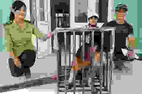 Góp tiền mua khỉ đuôi lợn thuộc Sách đỏ để giao kiểm lâm