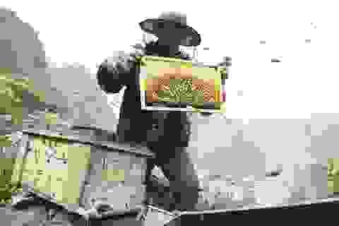 Mùa thu hoạch mật ong trên cao nguyên đá Hà Giang