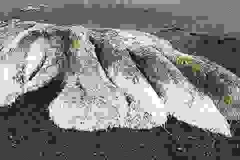 Xác 'quái vật biển không đầu' dạt vào bờ biển Nga