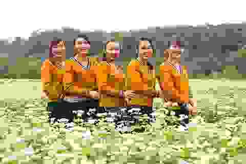 Chiêm ngưỡng vườn hoa Tam giác mạch đầu tiên ở xứ Nghệ
