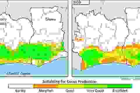 Các chuyên gia cảnh báo, socola có thể sẽ biến mất vào năm 2050