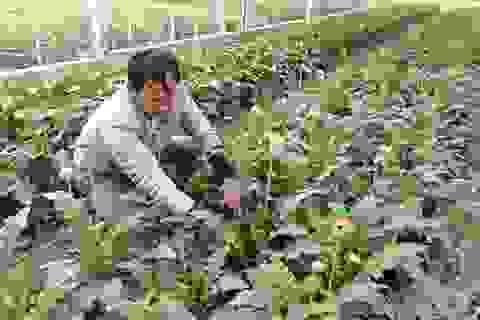 Vừa làm nhân viên đường sắt, vừa trồng hoa thu hàng trăm triệu đồng
