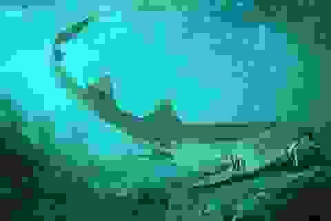 Phát hiện răng hoá thạch loài cá mập cổ đại hoàn toàn mới