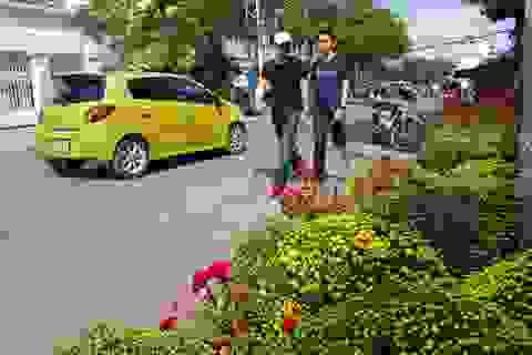 Nha Trang: Sắc xuân ngập tràn phố biển, du khách háo hức dạo phố