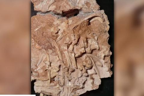 """Phát hiện hoá thạch """"vua thằn lằn"""" trước thời khủng long bạo chúa"""