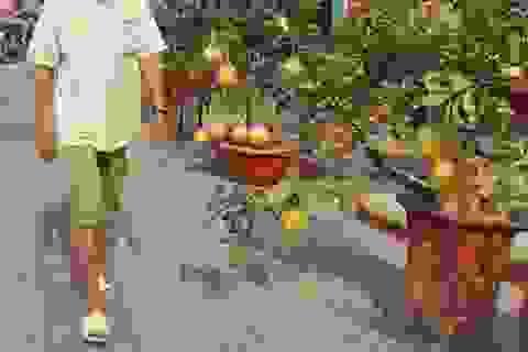 Coi chừng rước bệnh vào thân khi dùng trái kiểng