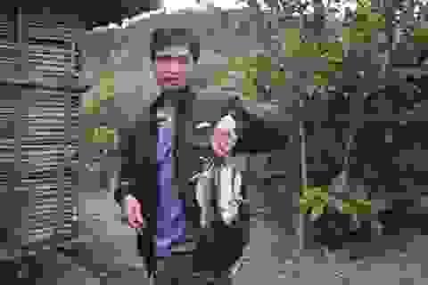 Xuân về, theo chân người dân bản địa săn chuột rừng