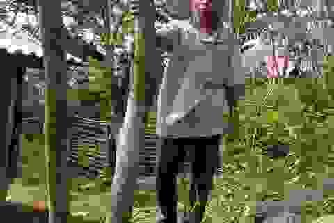 Có rừng sưa tiền tỷ, cả làng quyết không bán, bảo vệ như báu vật