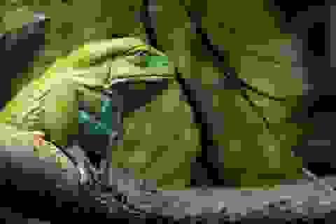 """Kiểm tra chỉ số IQ của trẻ qua câu hỏi: """"Con ếch ra khỏi giếng"""""""