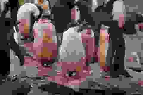 Theo dõi thực đơn của chim cánh cụt bằng… ảnh chụp từ không gian