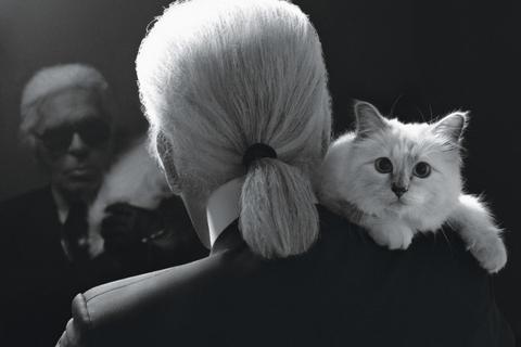 Liệu Karl Lagerfeld có để mèo Choupette thừa kế 4.550 tỷ đồng?
