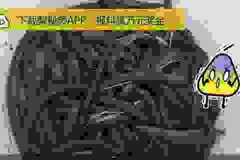 Thu lời lớn, dân Trung Quốc đổ xô đi đào giun đất về vừa bán, vừa… ăn