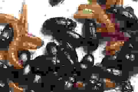 Người phụ nữ ăn bọ sống mỗi ngày để chống ung thư