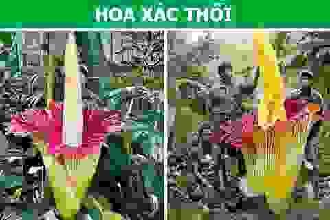 """Sửng sốt với những loài thực vật sở hữu """"siêu năng lực"""""""