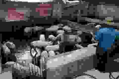 Nghệ An: Người chăn nuôi hoang mang khi xuất hiện thêm ổ dịch tả lợn châu Phi