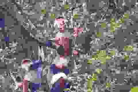Nhiều đàn Voọc ngũ sắc mới xuất hiện tại Vườn Quốc gia Bạch Mã