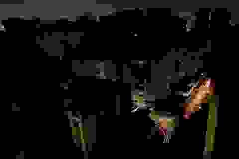 """""""Tổng thống tự phong"""" nói 17 người Venezuela thiệt mạng do mất điện"""