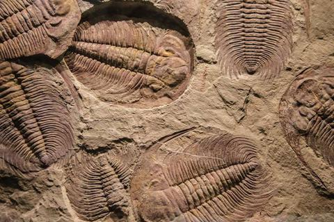 Lịch sử tiến hóa của động vật trên Trái Đất có thể phải viết lại