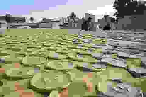 Quá đói, người dân Haiti phải ăn bánh làm từ bùn