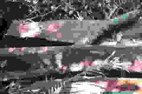Bí thư Tỉnh ủy Quảng Bình chỉ đạo làm rõ vụ phá rừng tại VQG Phong Nha - Kẻ Bàng