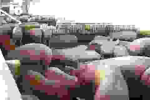 Quy định 'lạ đời' mới ra: Bèo tây, rau chuối… không được cho lợn ăn