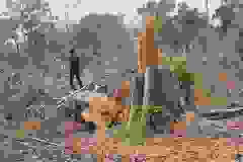 Khởi tố vụ phá gần 5ha rừng