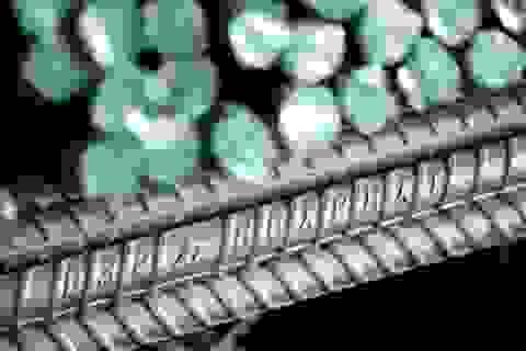 Thép Hòa Phát tiếp tục dẫn đầu Top 10 DN Vật liệu xây dựng uy tín