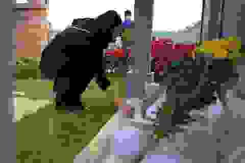 Người dân viếng mộ dịp Tết Thanh Minh