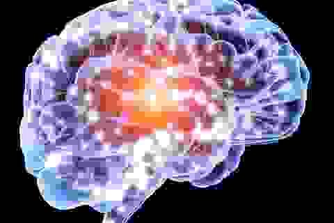 Con người liên tục sản sinh tế bào não suốt cuộc đời