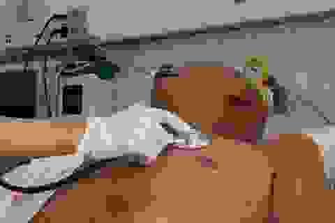 Nhiễm xoắn khuẩn khó phát hiện, bệnh nhân suýt chết