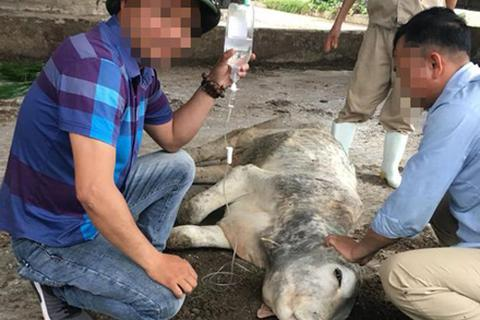 Con trai cựu Chủ tịch BIDV Trần Bắc Hà tự ý bán bò dự án lấy tiền tư túi