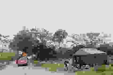 Phát hiện thêm ổ dịch tả lợn châu Phi mới ở Ninh Bình