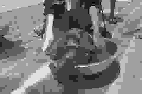 Phát hiện xác rùa biển quý hiếm bị cắt cụt 2 chi trước