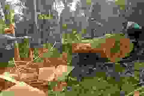 Phát hiện một vụ phá rừng quy mô lớn