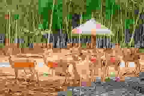 """Liên tiếp thú hiếm sinh nở tại """"ngôi nhà động vật năm châu"""" Vinpearl Safari"""
