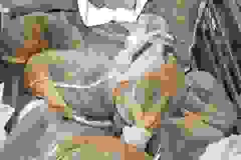 Chặn giữ xe kéo vận chuyển 16 cá thể động vật hoang dã